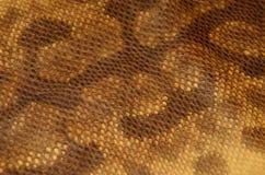 Fundo da textura do couro da pele de serpente Imagem de Stock