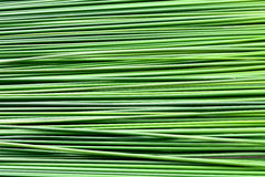 Fundo da textura do papiro da folha do verde longo fotos de stock