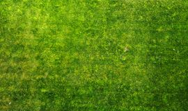 Fundo da textura da grama verde aéreo foto de stock royalty free