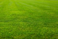 Fundo da textura da grama verde, opinião do close-up Fotografia de Stock