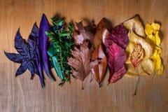 Fundo da transição da cor da folha do outono Fotografia de Stock
