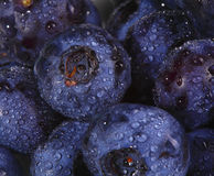 Fundo da uva-do-monte imagens de stock royalty free