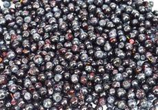 Fundo da uva-do-monte imagem de stock