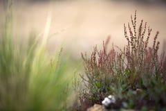 Fundo da vegetação Fotos de Stock Royalty Free