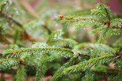 Fundo da vegetação de floresta Fotos de Stock