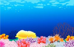 Fundo da vida de mar Foto de Stock