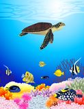 Fundo da vida de mar Fotografia de Stock