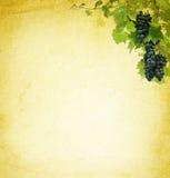 Fundo da vinha Imagem de Stock