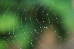 Fundo da Web de aranha Fotos de Stock