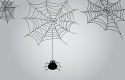 Fundo da Web de aranha Fotos de Stock Royalty Free