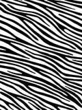 Fundo da zebra Imagem de Stock Royalty Free