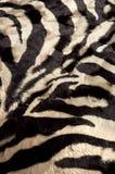 Fundo da zebra Fotografia de Stock