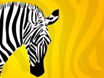 Fundo da zebra Fotos de Stock Royalty Free
