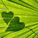 Fundo dado forma coração da folha da videira do amante de natureza Fotos de Stock