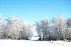 Fundo das árvores do inverno Imagens de Stock Royalty Free