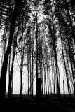 Fundo das árvores do Seashore Imagens de Stock