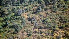 Fundo das árvores e das plantas de floresta Fotos de Stock Royalty Free