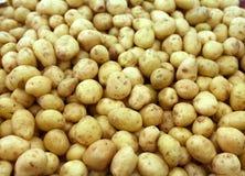Fundo das batatas Fotos de Stock Royalty Free