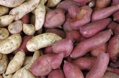 Fundo das batatas Imagem de Stock