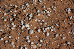 Fundo das conchas do mar Fotografia de Stock Royalty Free