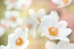 Fundo das flores fotografia de stock