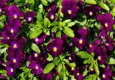 Fundo das flores Imagens de Stock Royalty Free