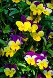 Fundo das flores Foto de Stock