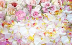 Fundo das flores das rosas Fotos de Stock Royalty Free