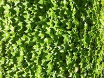 Fundo das folhas Fotos de Stock