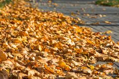 Fundo das folhas amarelas no pavimento fotos de stock royalty free