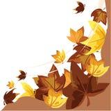 Fundo das folhas de outono Fotos de Stock