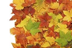 Fundo das folhas de outono Foto de Stock Royalty Free