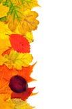 Fundo das folhas de outono Imagem de Stock