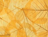 Fundo das folhas de outono caídas amarelas Imagens de Stock Royalty Free