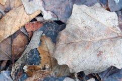 Fundo das folhas de outono diferentes Seque as folhas e os galhos sobre Fotos de Stock Royalty Free