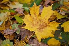 Fundo das folhas de outono, natureza, estações Imagens de Stock