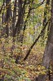 Fundo das folhas de outono, natureza, estações Imagens de Stock Royalty Free