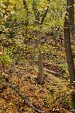 Fundo das folhas de outono, natureza, estações Fotografia de Stock