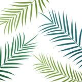 Fundo das folhas de palmeira Folhas de palmeira exóticas do vetor Fotografia de Stock