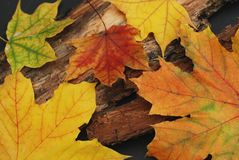 Fundo das folhas de plátano Folhas amarelas e da laranja no fundo de madeira Fotos de Stock