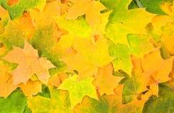 Fundo das folhas do verde amarelo Foto de Stock Royalty Free