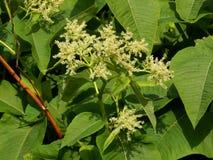 Fundo das folhas do verde com flores Imagem de Stock