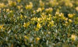Fundo das folhas do verde e do amarelo imagem de stock royalty free
