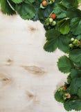 Fundo das folhas e do fruto da morango na madeira Fotografia de Stock Royalty Free