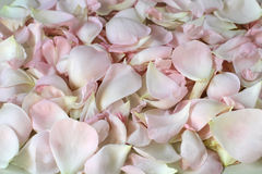 Fundo das pétalas cor-de-rosa Imagens de Stock Royalty Free