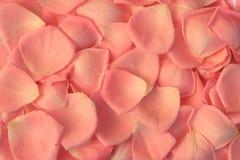 Fundo das pétalas de Rosa Imagem de Stock Royalty Free