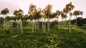 Fundo das palmeiras Sun e céu foto de stock royalty free