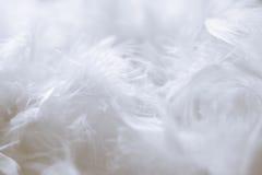 Fundo das penas brancas - fotos conservadas em estoque fotografia de stock royalty free