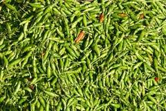 Fundo das pimentas de pimentão quente Fotos de Stock Royalty Free