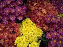 Fundo das plantas decorativas Imagens de Stock Royalty Free